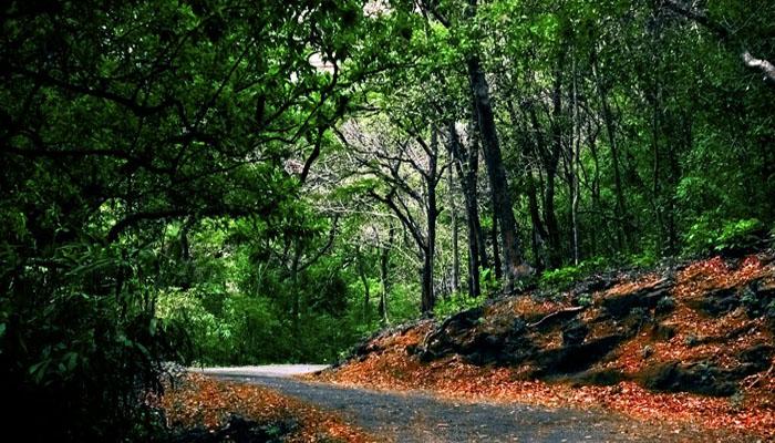 ബോണക്കാട് മലനിരകളിലേക്ക് ഒരു യാത്ര